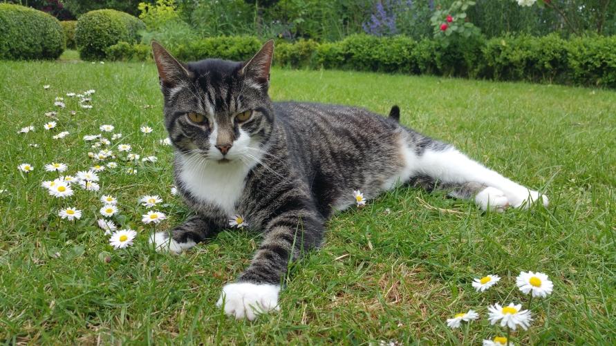 Preise / Betreuungskosten der GOLD CAT Katzenbetreuung Hamburg. Ihr Katzensitter / Tiersitter Marcel Danch