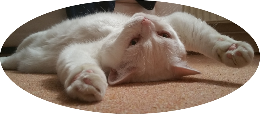 Ihr zertifizierter Katzensitter Marcel Danch GOLD CAT Katzenbetreuung Hamburg. Katzensitting mit Qualifikationen